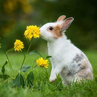 Fibiotic Pro for Rabbits