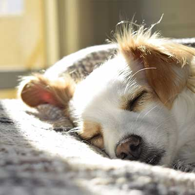 Calm Care For Dogs to ease worry and stress