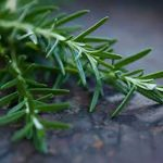 Rosemary as an ingredient