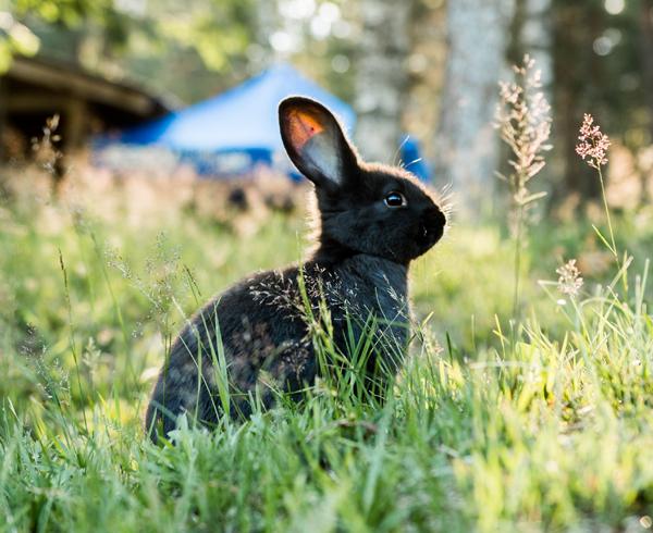 Subscription service bunny