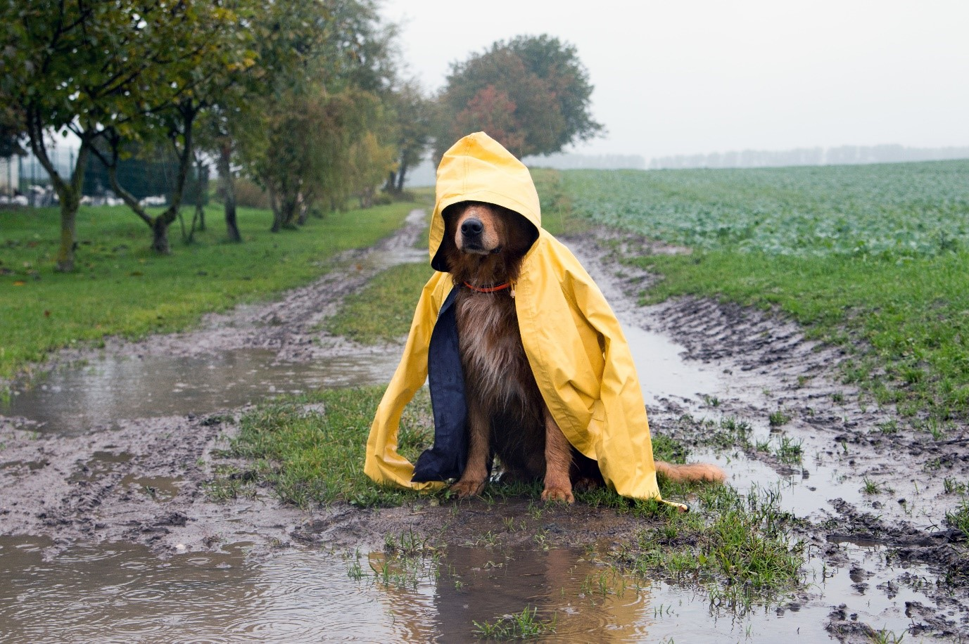 rainy-day-and-dog