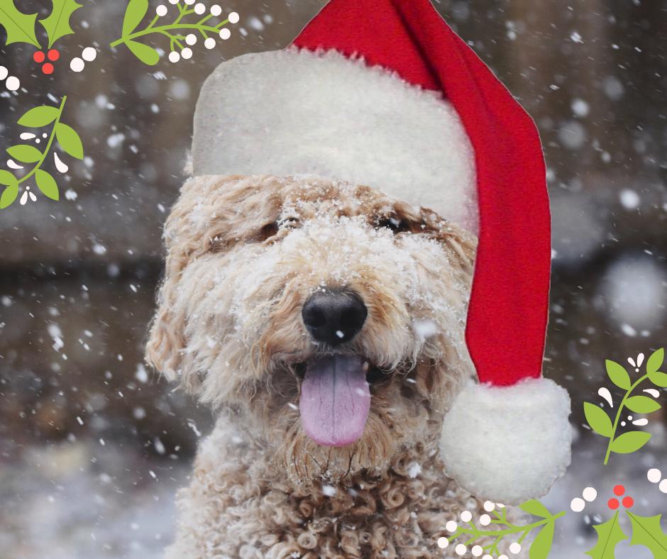 Keep dog safe at christmas