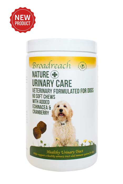 Urinary Care for Dogs