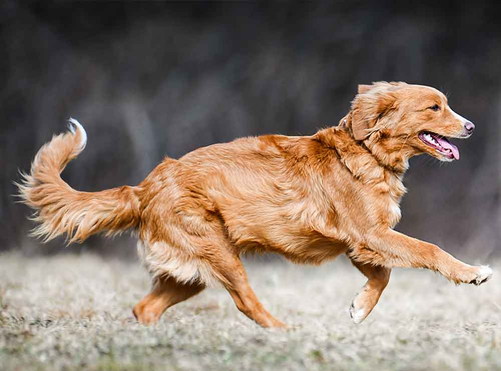 Natural pet supplements - Caring for dogs with joint issues - Top tips