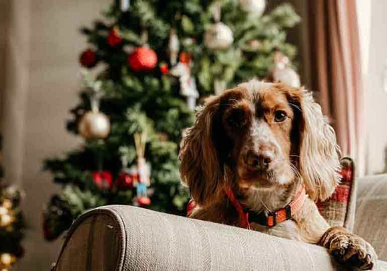 Christmas gifts for furry friends