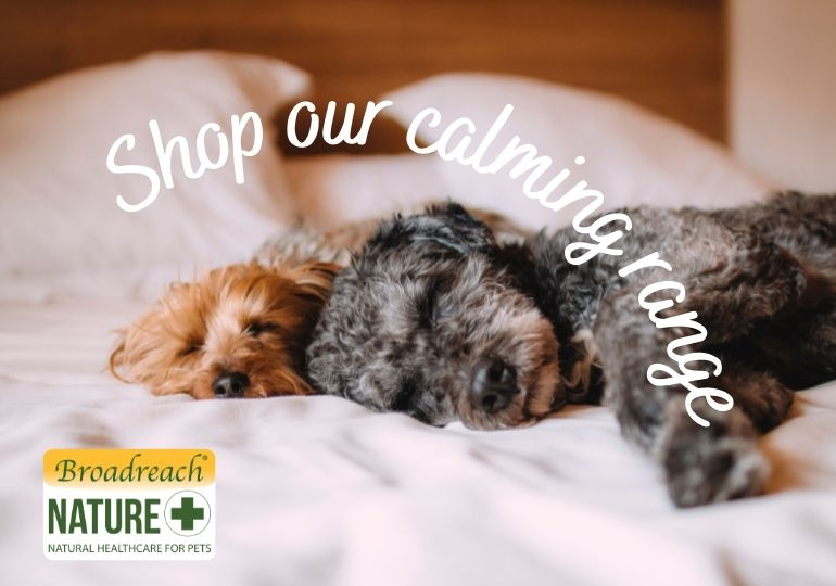 Shop our calming range