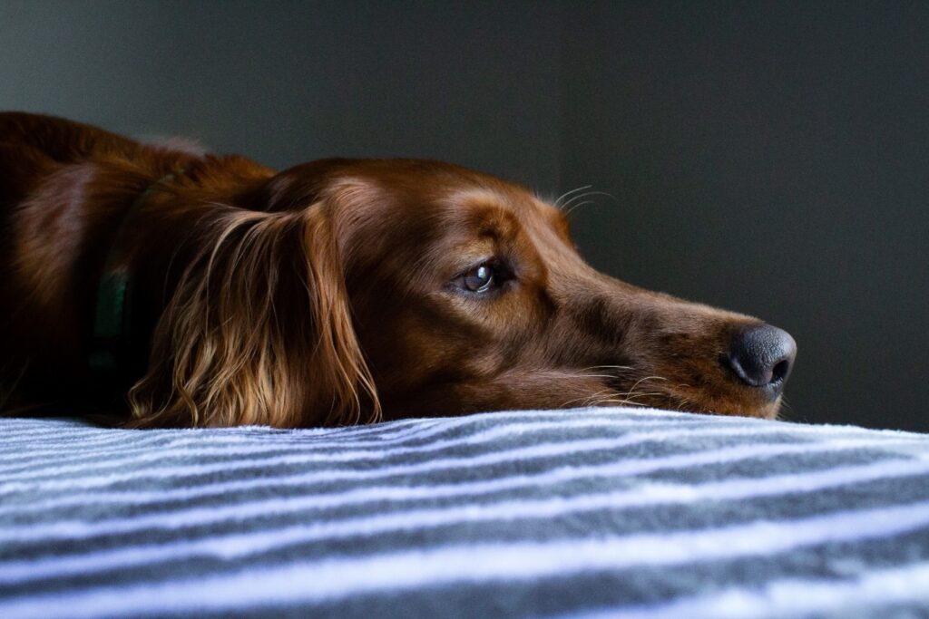 stressed dog